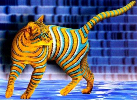 Görsel Resimler Renkli Kedi