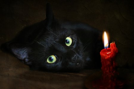 Görsel Reismler Siyah Kedi